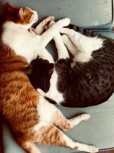 Tom and Steve sleeping